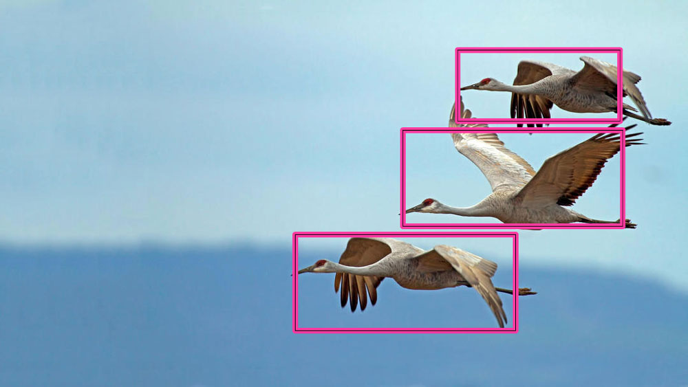 Birds detected by AI